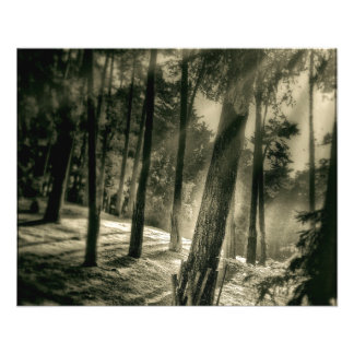 "Cool Black and White Forest Sunshine Nature 4.5"" X 5.6"" Flyer"