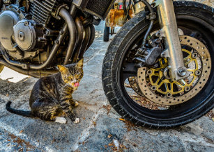Cool Cat Motorcycle Funny Greeting Card