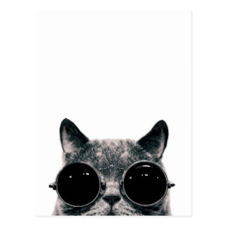 COOL CAT. POSTCARD