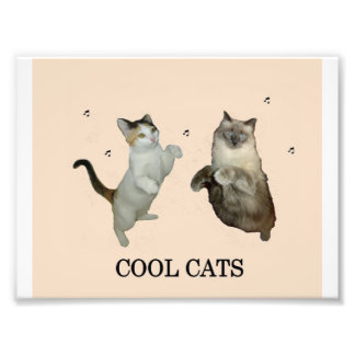 Cool Cats Photograph