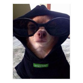 Cool Chihuahua Postcard