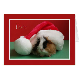 Cool Christmas Guinea Pig Card