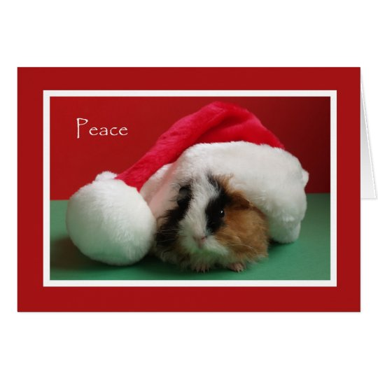 Cool Christmas Guinea Pig Card