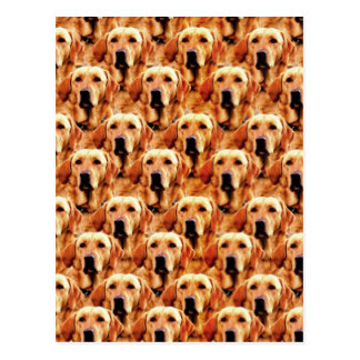 Cool Dog Art Doggie Golden Retriever Abstract Postcard