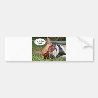 """Cool Dude Chihuahua Dog, """"I'm a Cool Dude"""" Bumper Sticker"""