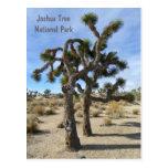 Cool Joshua Tree Postcard!