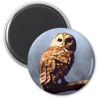 Cool Owl Magnet