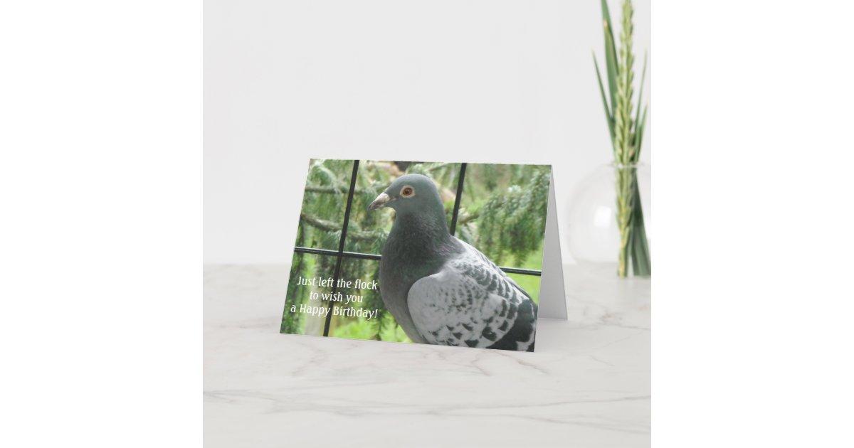 Cool Pigeon Birthday Card Zazzle