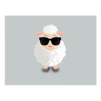 Cool Sheep Postcard