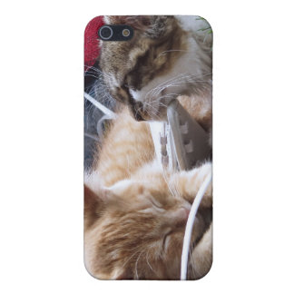 Cool Snow Cats, Two Kittens in Love, Winter Skates Cover For iPhone 5