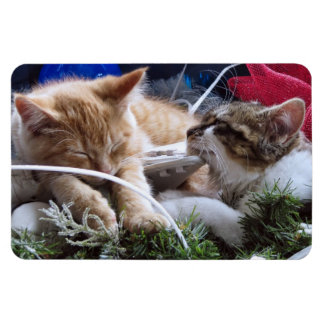 Cool Snow Cats, Two Kittens in Love, Winter Skates Vinyl Magnet
