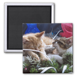 Cool Snow Cats, Two Kittens in Love, Winter Skates Square Magnet