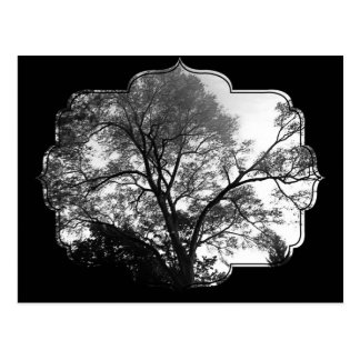Cool Tree Photography. Postcard