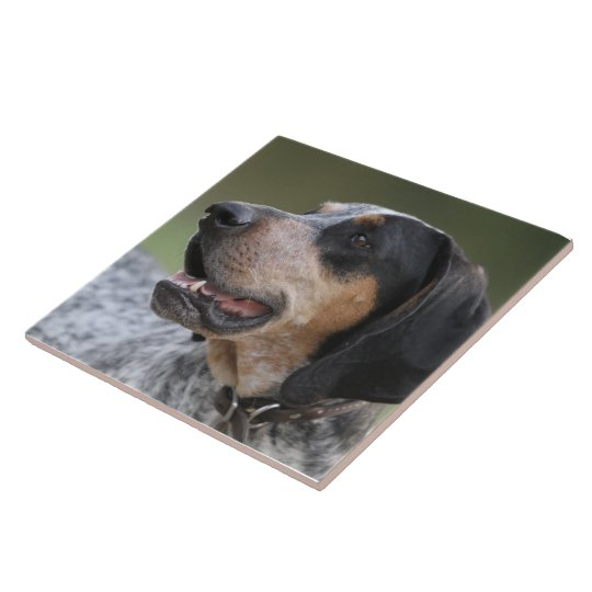 Coonhound Large Square Tile