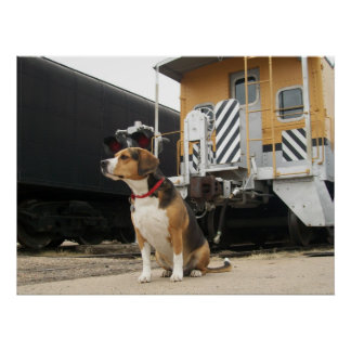 Cooper the Beagle at Union Train Depot Poster
