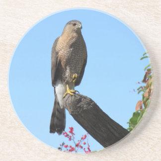 Cooper's Hawk Coaster