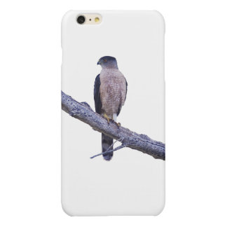 Cooper's Hawk iPhone 6 Plus case