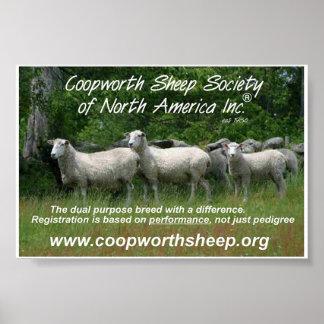 Coopworth Sheep Poster