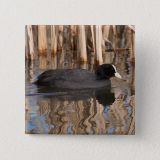 Coot 15 Cm Square Badge