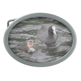 Coot and Chick Belt Buckle