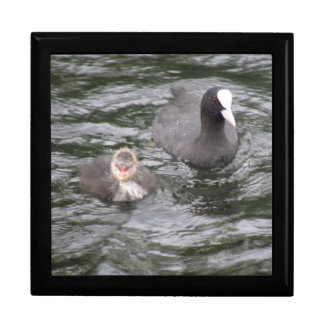 Coot and Chick Gift Box