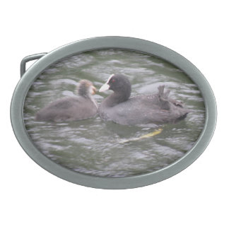 Coot Feeding Hungry Chick Belt Buckle