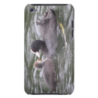Coot Feeding Hungry Chick  iPod Case-Mate Cases