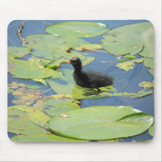 coot fledgling mouse pad