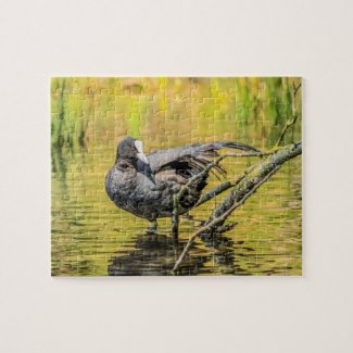 Coot Jigsaw Puzzle