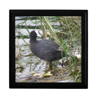Coot on the Riverbank Gift Box