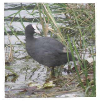 Coot on the Riverbank Napkin