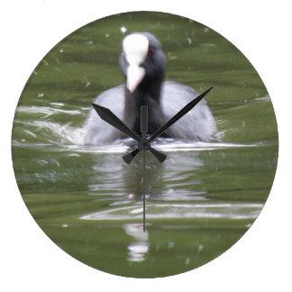 Coot Swimming Wall Clock