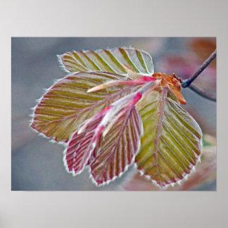 Copper Beech Leaves Print