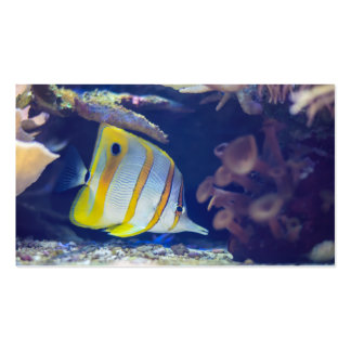 Copperband Butterflyfish Pack Of Standard Business Cards