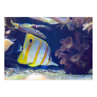 Copperband Butterflyfish Pack Of Chubby Business Cards