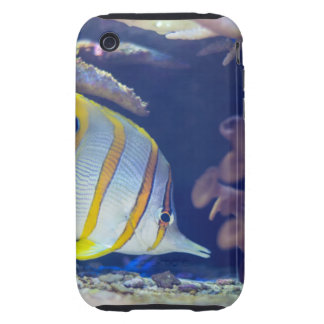 Copperband Butterflyfish iPhone 3 Tough Cover