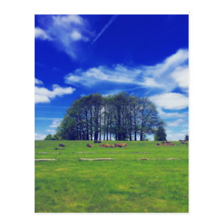 Copse of trees and beautiful blue sky - postcard