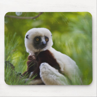 Coquerel's Sifaka in the forest 2 Mouse Mat