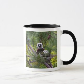 Coquerel's Sifaka in the forest Mug