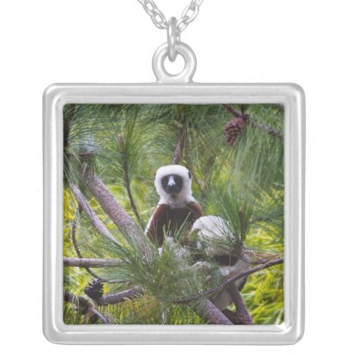 Coquerel's Sifaka in the forest Personalized Necklace