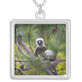 Coquerel's Sifaka in the forest Silver Plated Necklace