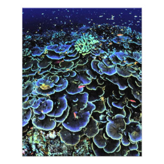 coral-386976  coral UNDERWATER PHOTOGRAPHY OCEAN S Flyers