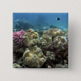 Coral, Agincourt Reef, Great Barrier Reef, 15 Cm Square Badge