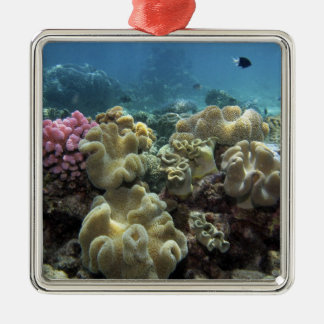 Coral, Agincourt Reef, Great Barrier Reef, Christmas Ornament