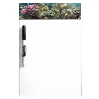 Coral, Agincourt Reef, Great Barrier Reef, Dry Erase Board