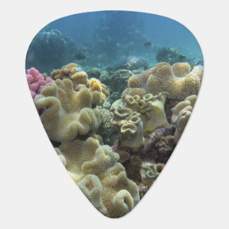 Coral, Agincourt Reef, Great Barrier Reef, Guitar Pick