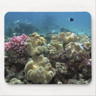 Coral, Agincourt Reef, Great Barrier Reef, Mouse Mat