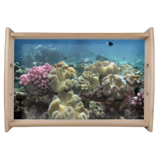 Coral, Agincourt Reef, Great Barrier Reef, Serving Tray