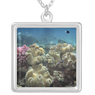 Coral, Agincourt Reef, Great Barrier Reef, Silver Plated Necklace