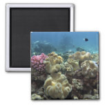 Coral, Agincourt Reef, Great Barrier Reef, Square Magnet